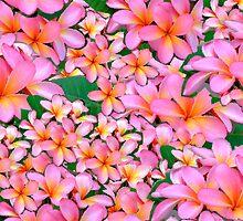Frangipani Flowers Pink by amanda metalcat