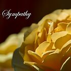 In Sympathy by Tracy Riddell
