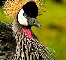 Crowned Crane by AntonAlberts