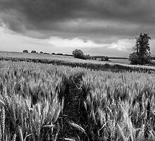 Black and White Fields by Mudgers