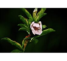 A flower around darkness Photographic Print