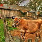 What a cow of a shot ! by Michael Matthews