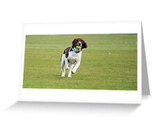 English Springer Spaniel Greeting Card
