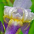 Nature's tears by Carolyn Clark
