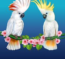 COCKATOO COURTSHIP by GLENN HOLBROOK