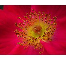 closeup Photographic Print