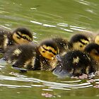 Little Ducklings Happy Together by ienemien