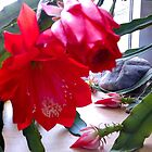 WINTER CACTUS BLOOM by JoAnnHayden