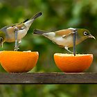 Silvereye Citrus Surprise! by Kathy Reid