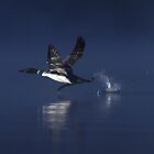 Flight of the Loon - Wilson Lake by Jim Cumming