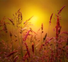 JUST A SUMMER DREAM by leonie7