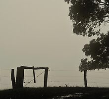 Fenced in Fog by metriognome