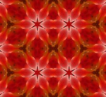 Kaleidoscope Geometry Pattern From Nature 20 by Kenneth Grzesik