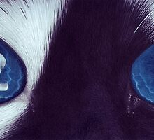 Cat with blue eyes by MiryamsArtWork