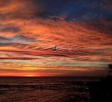 Glorious Sunrise Burleigh Heads by Noel Elliot
