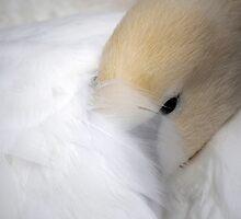 Sleepy Swan by Tiffany Dryburgh