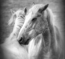 Forever Friends by paulmuscat