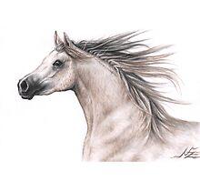Arabian Horse by Nicole Zeug