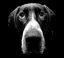 German Shorthaired Pointer Dog Face by artchastudio