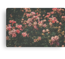 Estate Rose Garden Canvas Print