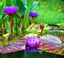 Summer Lily Pond by ♛ VIAINA