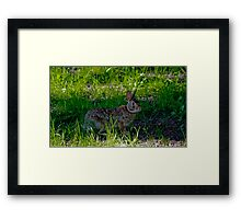 Peter Cottontail Framed Print