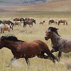 Stallion Chase by Gene Praag