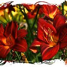 Fire-lillies by © Kira Bodensted
