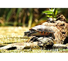 Cute Big Turtle Photographic Print