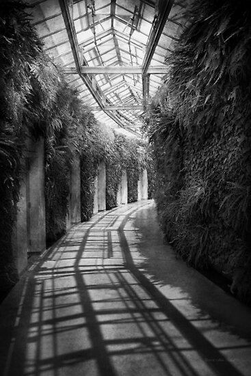 Architecture - The unchosen path - BW by Mike  Savad