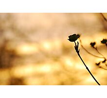 Flower at fire time Photographic Print