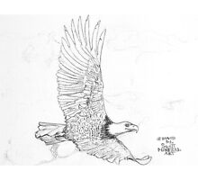 On the rise of an updraft Bald Eagle soars by David M Scott