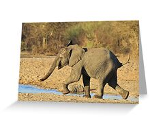 Elephant - Run of Youth - African Wildlife Background  Greeting Card