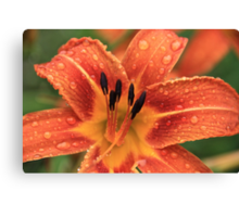Day Lily In The Rain Canvas Print