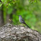 Tree Bird by Brent Fennell