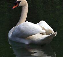 White Prince Swan by Spaha