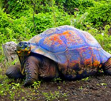 Cheeky Tortuga In The Galapagos by Al Bourassa