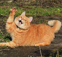 Ginger cat playing by turniptowers