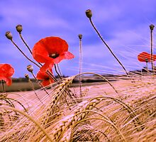 Barley with Poppies by JEZ22