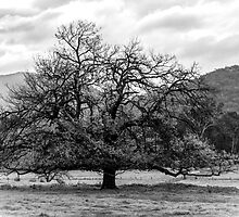 Shade Tree in Winter. by Bette Devine