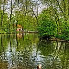 Thornton le Dale Duck Pond by Tom Gomez