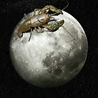 Lobster on the Moon by jakobin