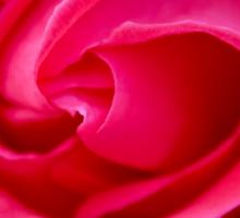 Rosy Sticker