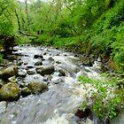 A river runs through it. by Johindes