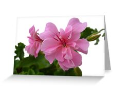 Pink flower transparent background Greeting Card