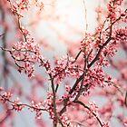 Springtime by alyphoto