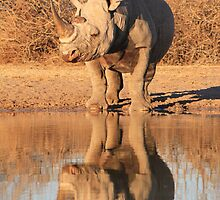 Black Rhino - Reflection of Power - African Wildlife  by LivingWild