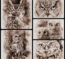 Owl Sketch Collection by fantasytripp