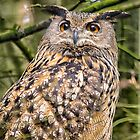 European Eagle Owl by M.S. Photography/Art