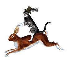 Cat Hare Photographic Print